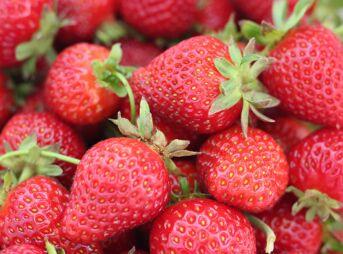 Le fruit du mois : la fraise